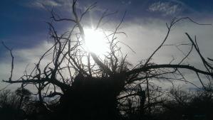 Pulaski Stump